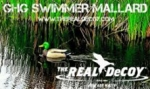 30% OFF -- Late season special -- THE REAL DeCOY® Swimmer GHG Mallard Drake - TRDMDSWGHG