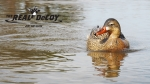 THE REAL DeCOY® Swimmer GHG Mallard Hen - TRDMHSWGHG